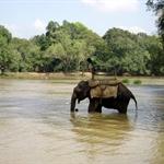 A thirsty elephant @ Nisargadhama