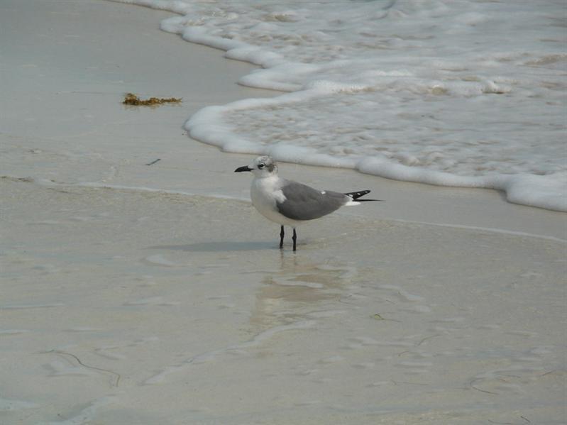 BAHIA HONDA State Park - 海鳥