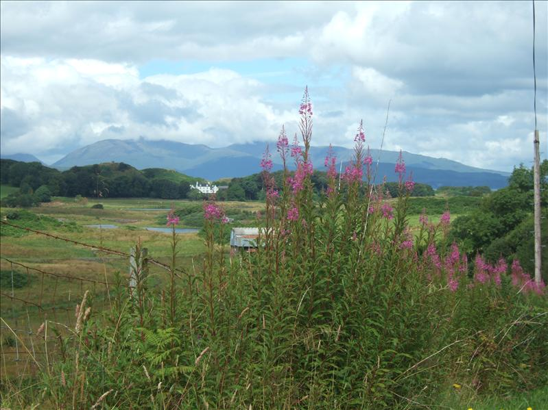 View to Ardencaple, Seil Island