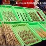 scorpions, crickets, and beetles