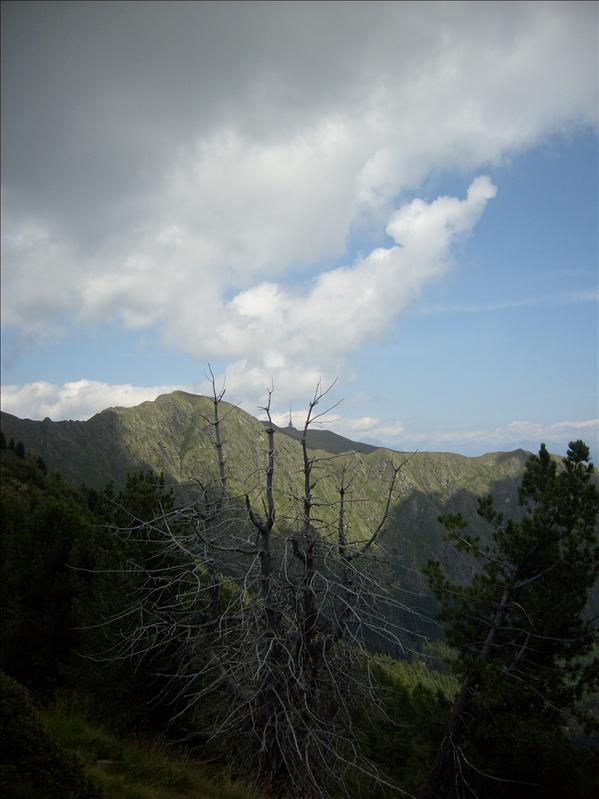 Gradiccioli•2009