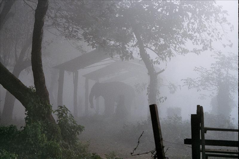 Elephant in the mist, Chitwan