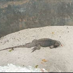A comodo dragon I think