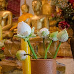 Wat Arun - Buddhas with Lotus Bloooms