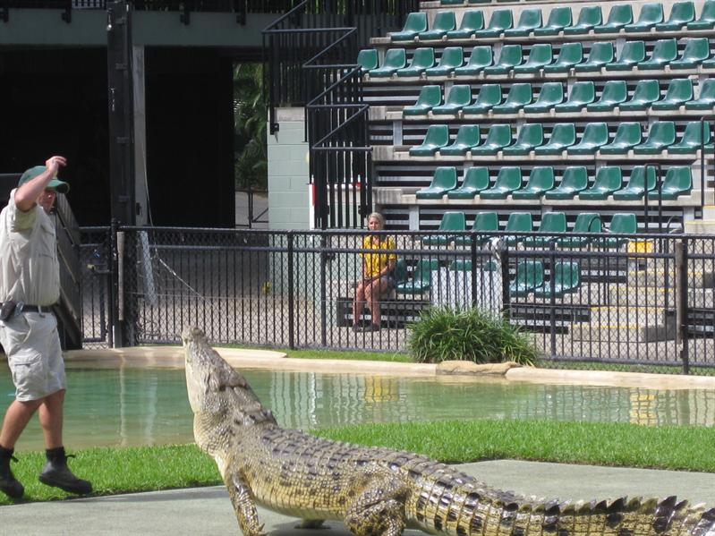 Croc jumping for its food