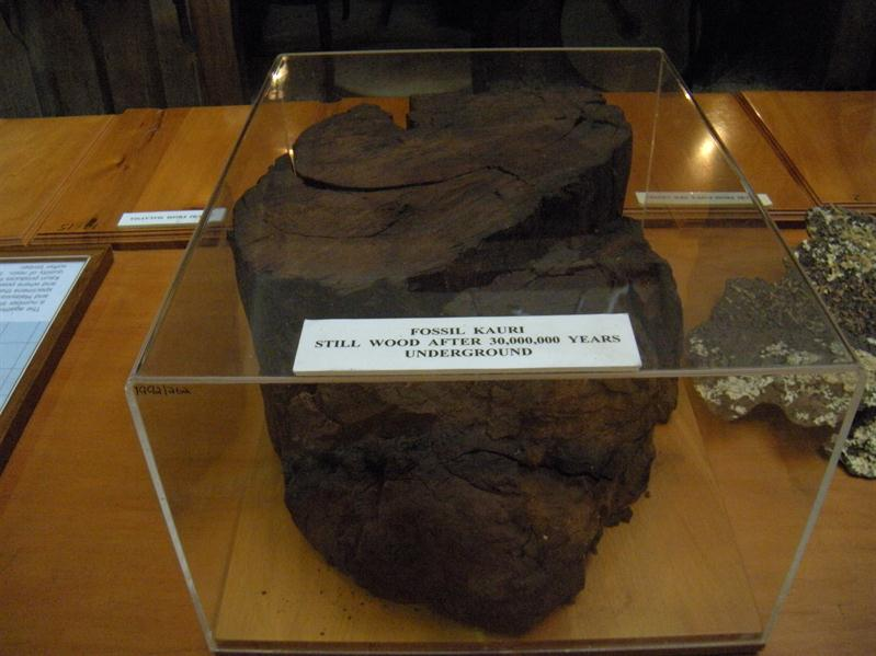A piece of kauri wood many thousands of years old - they have used pieces of this to make wooden objects