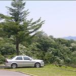 【Easy Climber】20090428登山社第35次登山-大同山、青龍嶺