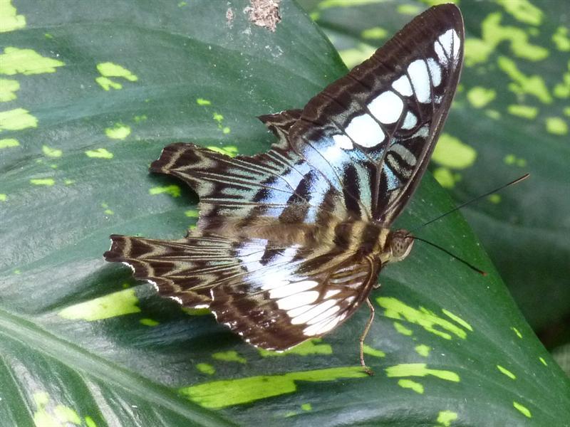 buterfly garden