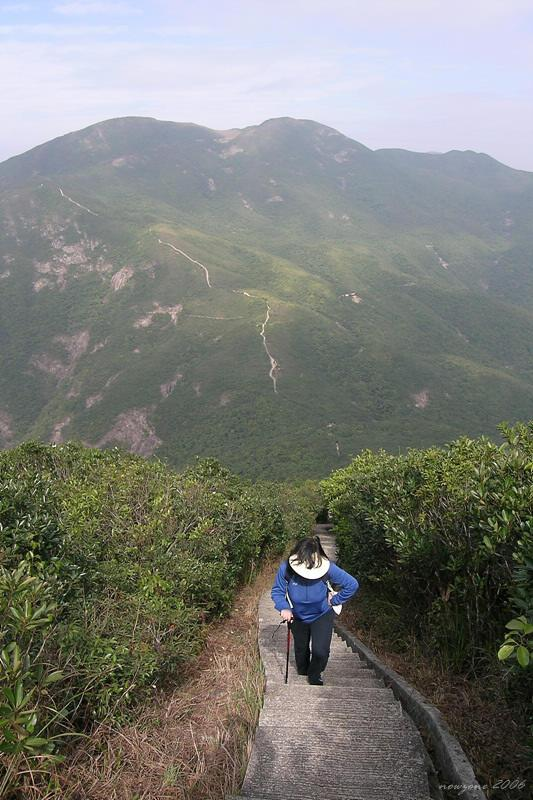 Looking back to Violet Hill 於高位回望紫羅蘭山,在山腰隱約見到一條橫走的小徑,