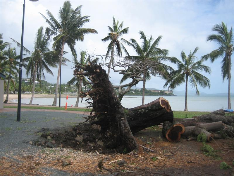 Aftermath of the cyclone