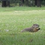 Some of the wildlife in Alexandria, Va.