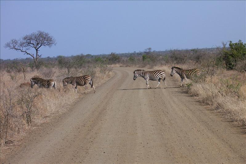Zebra crossing ! (ce qui veut dire passage piéton en anglais!)