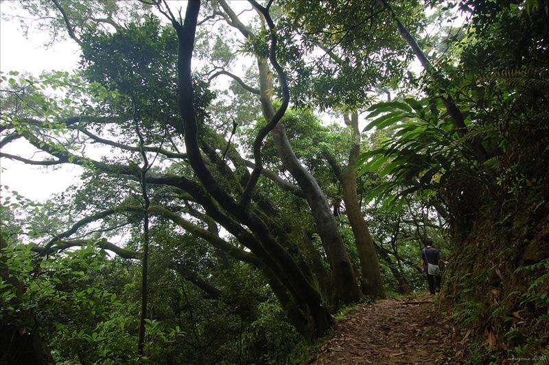 蓮北林徑 Lin Pak Forrest Trail