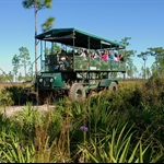 eco safari
