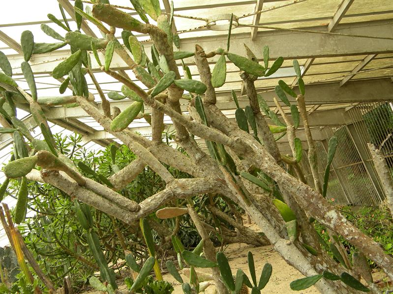 墾丁國家森林公園植物