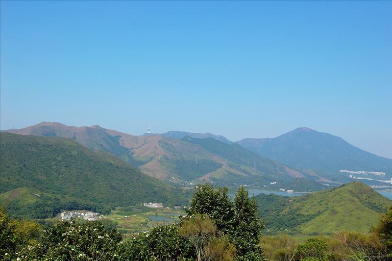 大陸的梧桐山