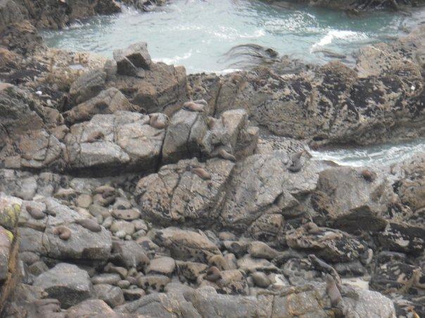 Spot the seals! Westport