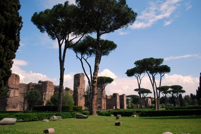 Those very Roman trees