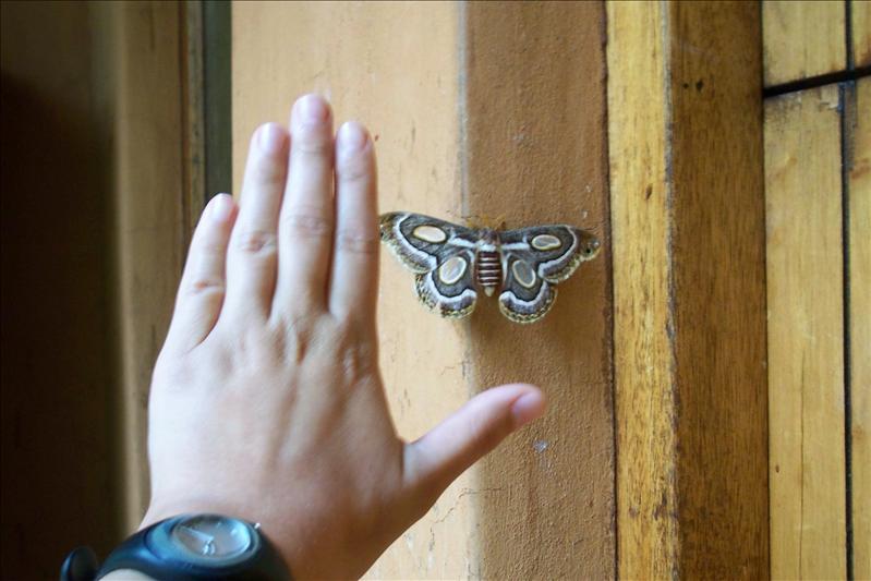 Moth / Papillon de nuit