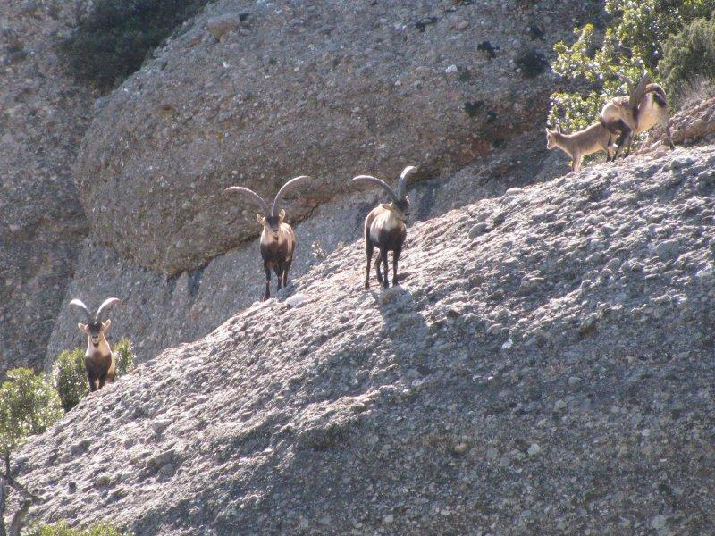 ... and saw goats ....