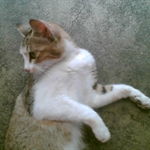 猫猫 (1).jpg