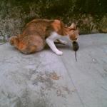 猫猫 (2).jpg