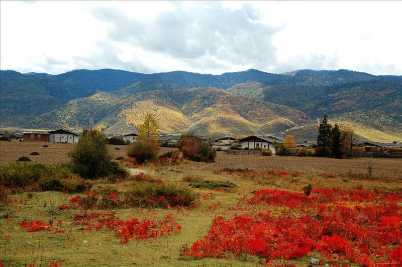 Red Grassland 中甸紅草地
