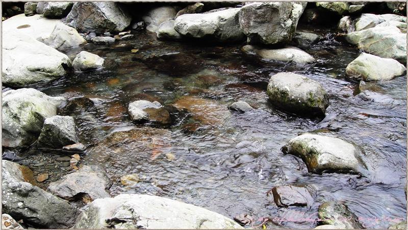 吊橋旁潺潺溪水-2