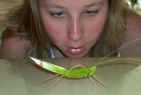 A grass grasshopper