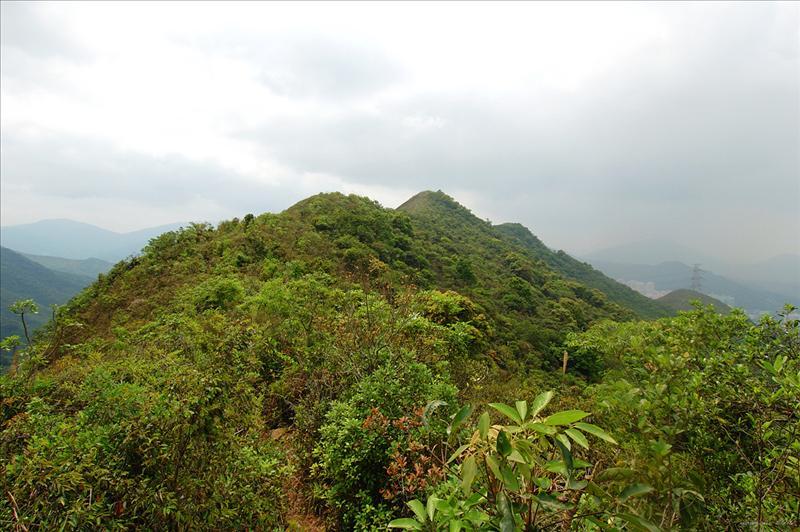 向五朵芙蓉龍山的五個山峰前進