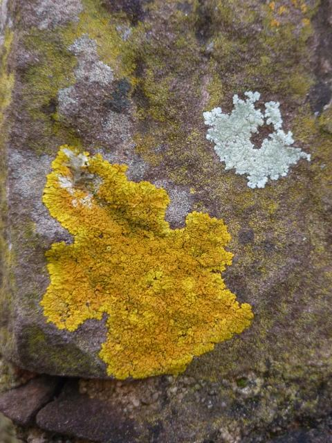 I'm liking this lichen