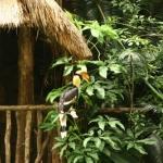 BirdPark-11.jpg