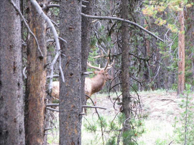 nog een Elk
