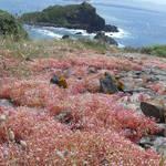 Managu e Cala Fenuggiu