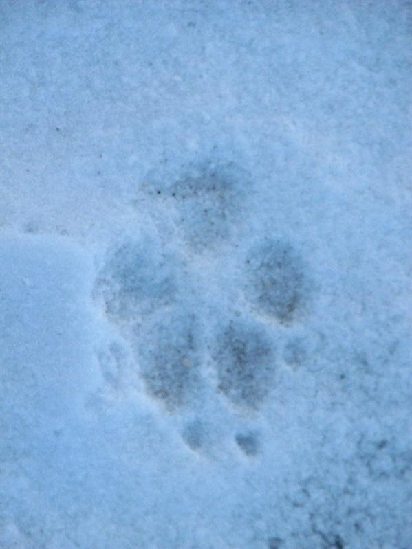 Soph spotted a nice footprint