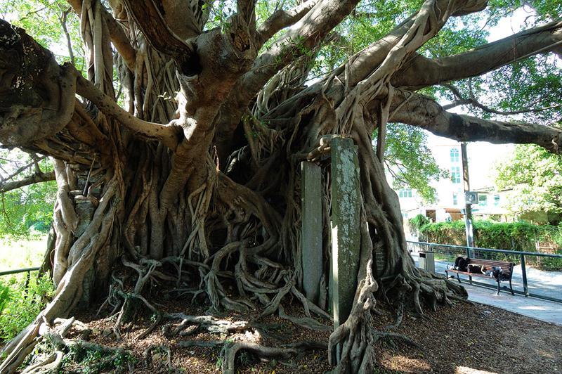 樹屋 Tree House