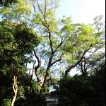 道風山基督教叢林