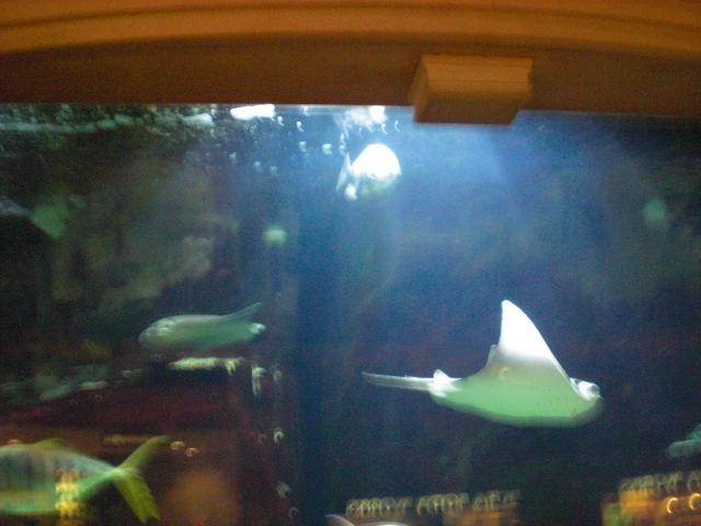 Stingray @ Caesar's aquarium