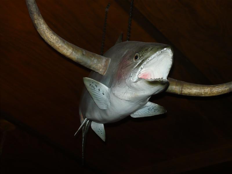 Long Horn fish