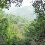Urwald in Meghalaya
