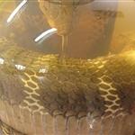 Snake in a jar