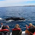 World Tour part 2 : Puerto Madryn ( Peninsula Valdès)