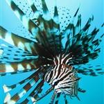 my frist scuba diving