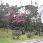 【Easy Climber】20100201登山社第66次活動-登紗帽山, 橫嶺古道