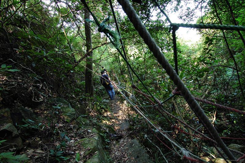 筆架山橫山林徑Beacon Hill Forest Trail