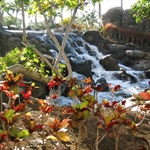 kona hawaii.jpg