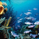 sea-scuba-diving-bonaire.jpg
