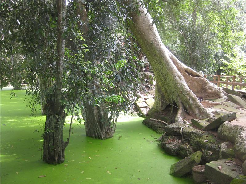Swamps to mysterious Ta Prohm