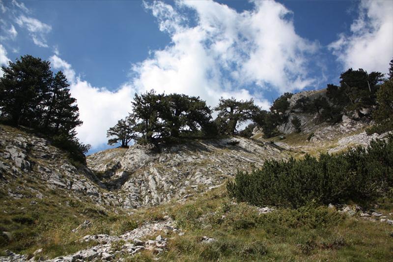Мурите около пътеката от х. Бъндерица за Казаните и Премката (Вихрен и Кончето)
