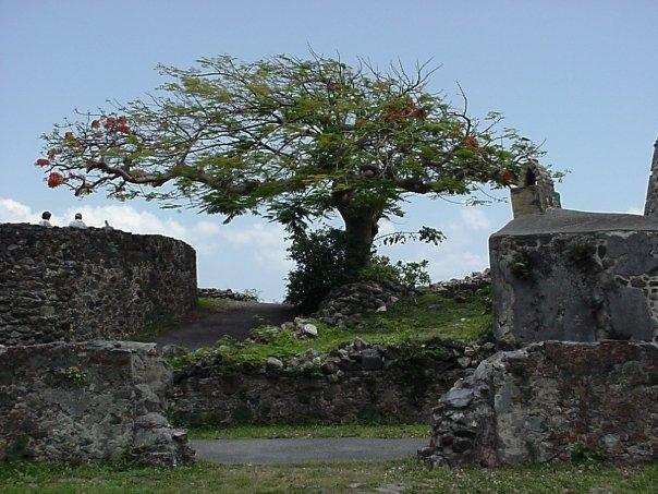 Tree amongst the ruins